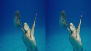 IMAX Under The Sea (2009) 3D.BluRay.HSBS.1080p.x264-CHD3D