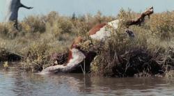 Bestie z po�udniowych krain / Beasts of the Southern Wild (2012) PL.BRRip.AC3.XviD.CiNEMAET-Smok Lektor PL   +rmvb