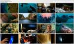 Wojownicze skorupiaki / Ninja Shrimp (2010) PL.HDTV.1080i / Lektor PL