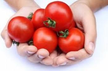 Tomat - Ist